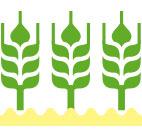 Cung cấp giống cây trồng, vật tư, thiết bị nông nghiệp