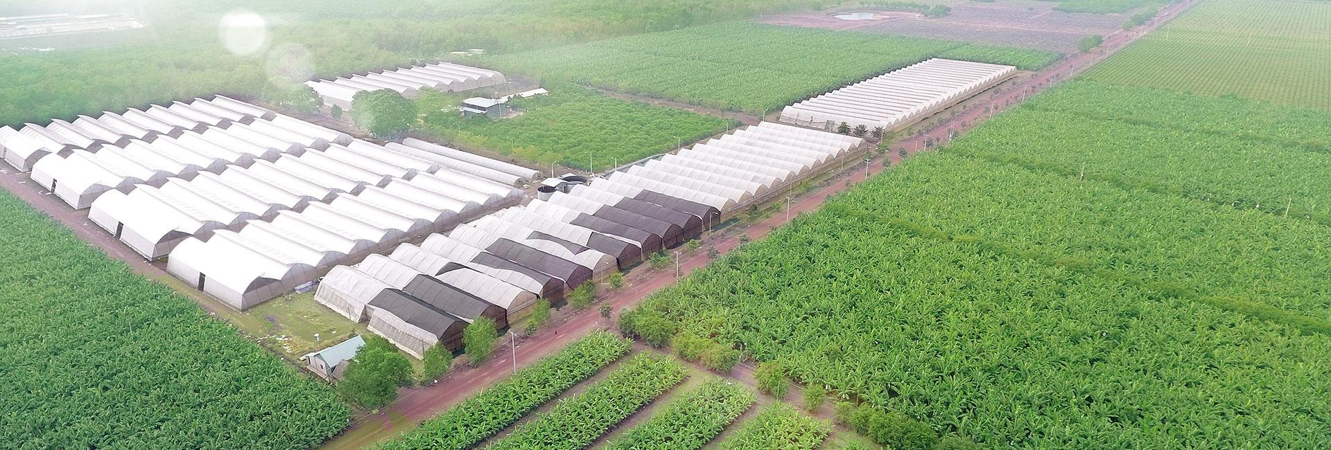 Khu nông nghiệp ứng dụng công nghệ cao AN THÁI