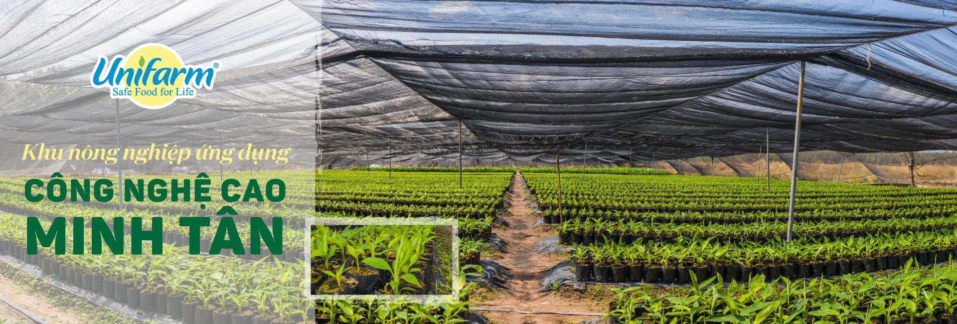 Vườn ươm khu nông nghiệp công nghệ cao Minh Tân